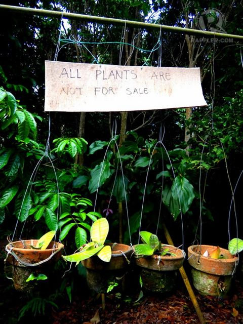 Plants in Liptong Woodland are not commercially for sale as they are meant for conservation