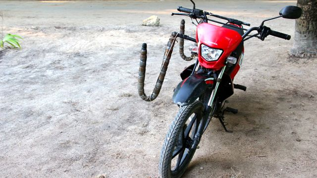 Customized motorbikes for surfers and their surfing boards