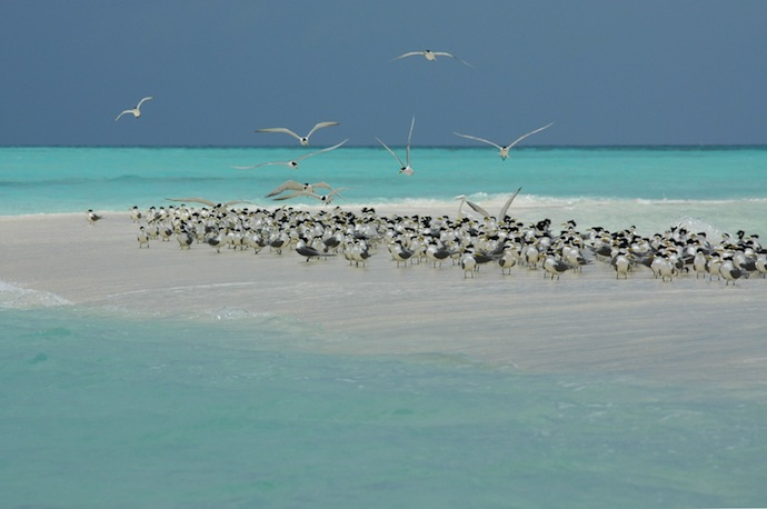 Image by Ron Van Oers/ Unesco